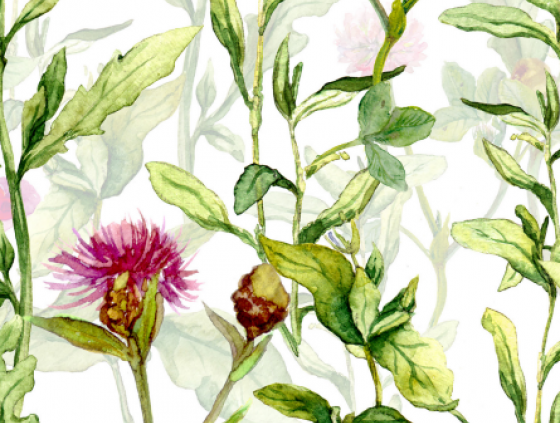 List of native plants useful for biodiversity