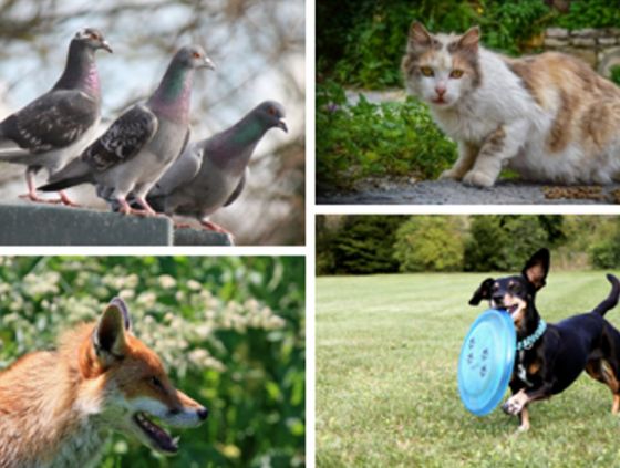 Survey 'Living together with animals in the city'