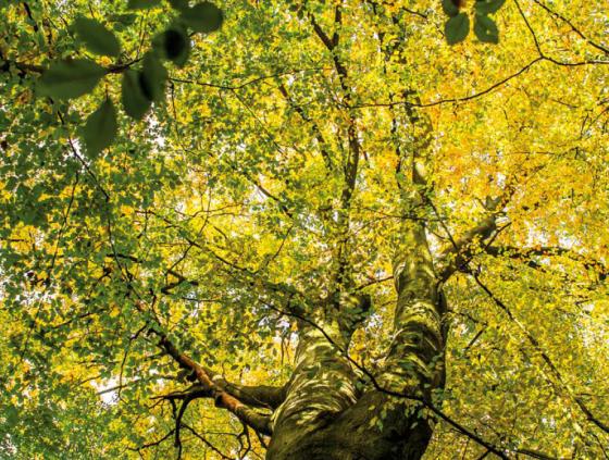 2020-2030 Tree Plan