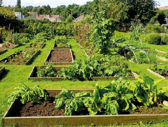 Need vegetable garden tips?