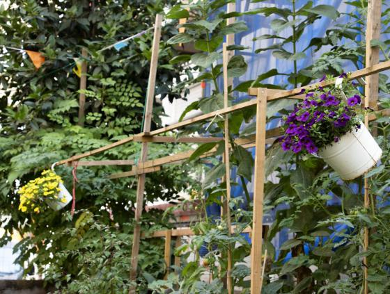 Major research on private gardens