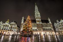 Brussels by Lights - Christmas tree - Grand-Place - click to enlarge